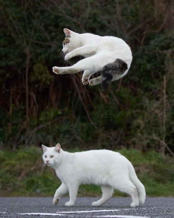 В кошачьих боевых искусствах используются как атакующие, так и оборонительные техники.