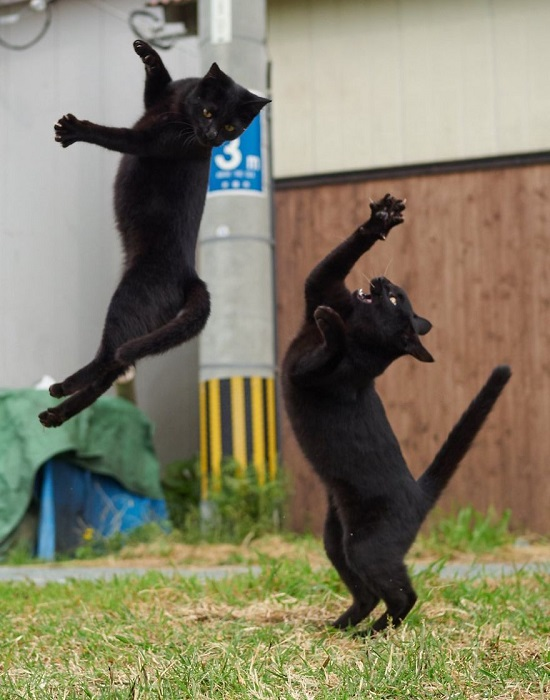 «Сильнее! Выше! Быстрее!»