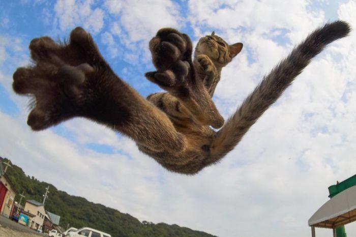 Представитель кошачьего племени, активно практикующий древнее боевое искусство.