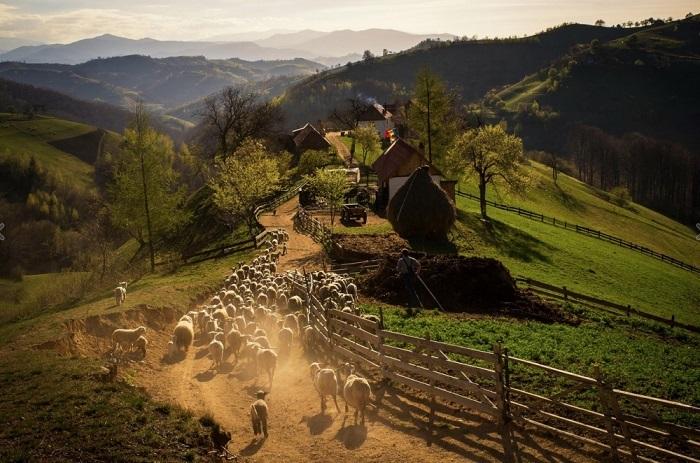 Весенний вечер в румынской деревне. Фотограф: Catalin Caciuc.