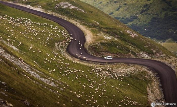 Горная дорога является одной из основных достопримечательностей Румынии. Фотограф: Ioan Balasanu.