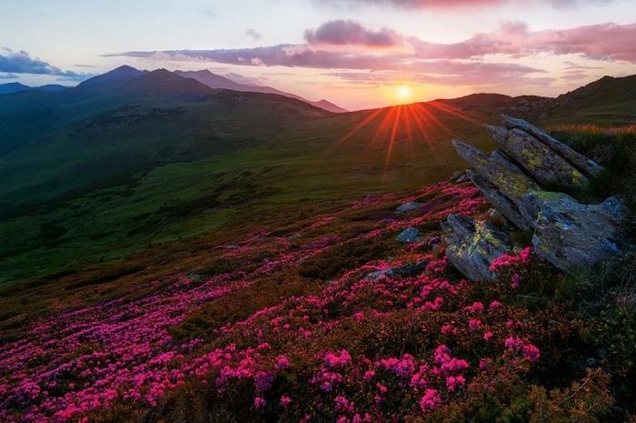 Горы Родней летом зацветают самыми удивительными оттенками. Яркие краски на склонах Румынских гор - это удивительное зрелище. Фотограф: Zsolt Kiss.