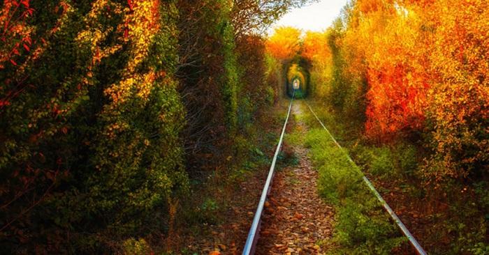 Самое романтическое место в Румынии. Благодаря буйной растительности проходящие поезда сделали природный тоннель. Фотограф: Alexandru Mahu.