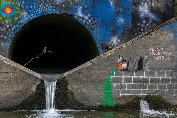 Вторым в категории «Человек и природа» стал швейцарский фотограф Феликс Хейнценберг (Felix Heintzenberg) со снимком зимородка у станции по очистке воды.