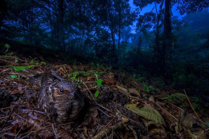 1-е место в номинации «Птицы» присуждено испанскому фотографу Хайме Кулебрасу (Jaime Culebras) за снимок с антоновым козодем.