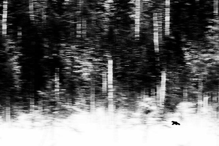 1-е место в номинации «Млекопитающие» присуждено голландскому фотографу Яну ван дер Грифу (Jan van der Greef) за снимок с охотящейся росомахой.