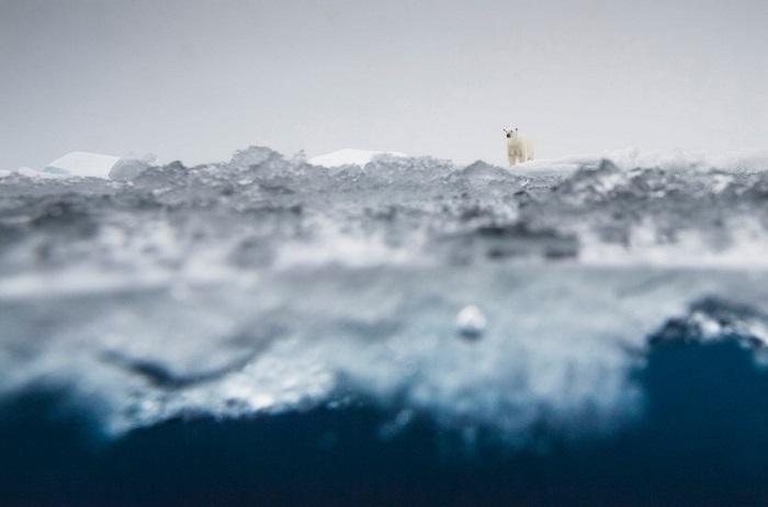 2-е место в категории «Млекопитающие» занял норвежский фотограф Оле Йорген Лиодден (Ole Jоrgen Liodden), запечатлевший белого медведя на льдине.