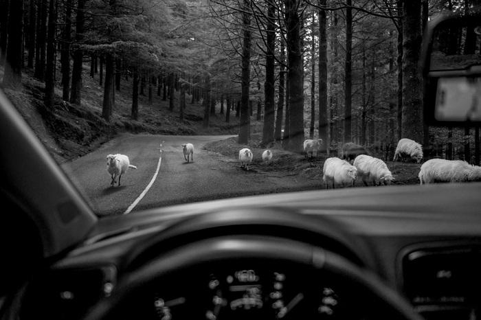 Автор фотографии: Витольд Жиомек.