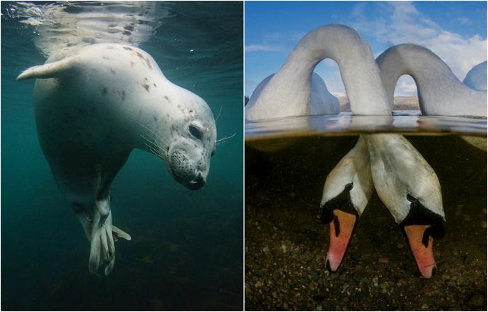 Фотографии победителей конкурса Underwater Photographer of the Year 2018.
