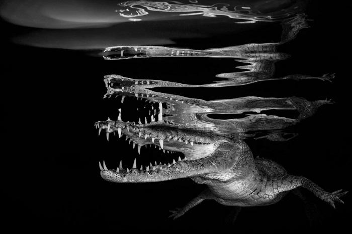 Победитель в категории «Черное и белое» и автор снимка – фотограф Борут Фурлан (Borut Furlan) из Словении.