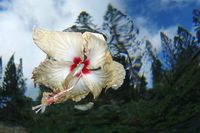 2-е место в категории «Компактный» занял фотограф Джек Бертомье (Jack Berthomier) из Новой Каледонии.