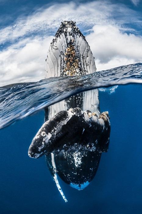 Победитель в категории «Широкий угол» и автор снимка - французский фотограф Грег Лекур (Greg Lecoeur).