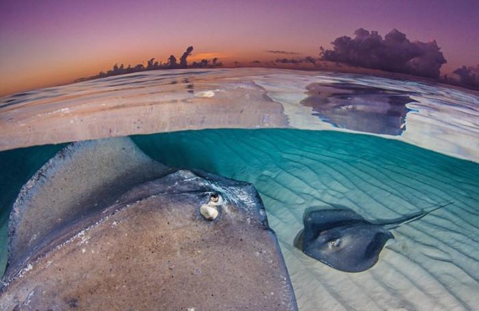 Большинство видов скатов обитают на самом дне океанов и морей.