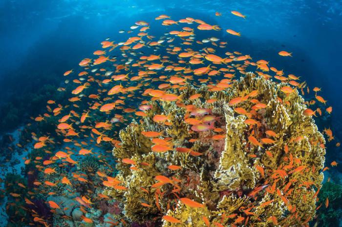 Удивительной красоты коралловые рифы Красного моря со снующими среди них разноцветными рыбками.