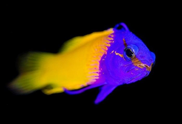 Светящаяся рыба.