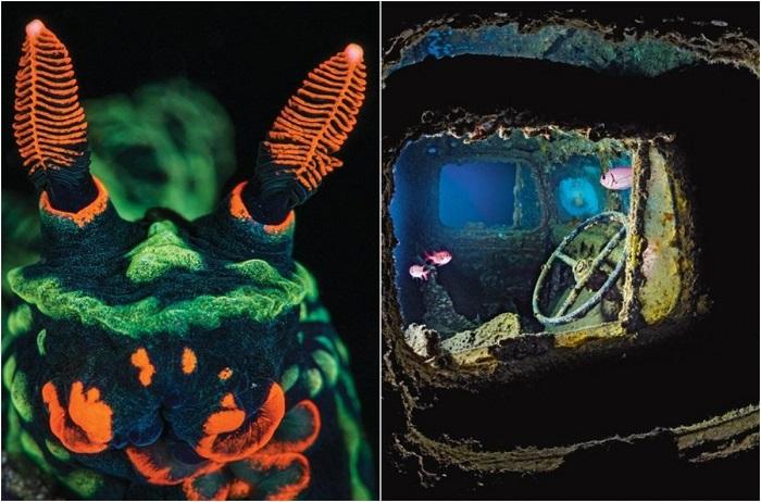 Подводный рай, в который стремятся дайверы.