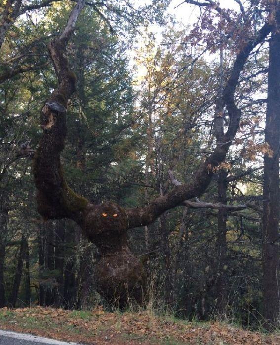 Пара желтых глаз превратила дерево в жуткое чудовище.