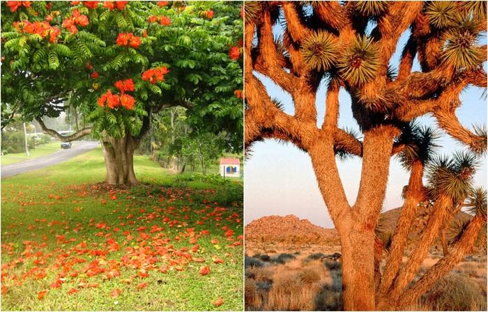 Деревья необычной формы со всех уголков мира.