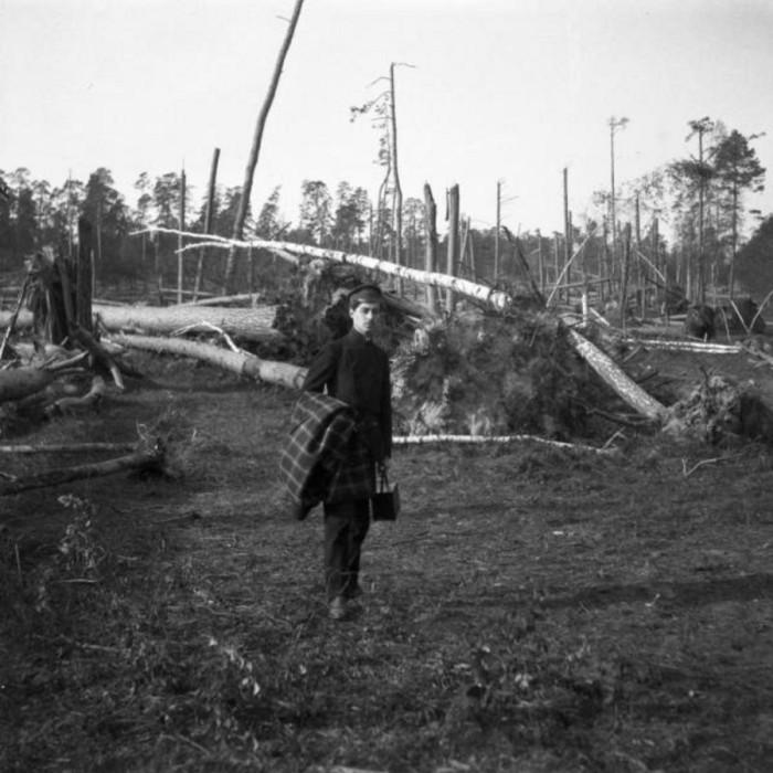 Мотя среди поваленного ураганом леса в Сокольниках.