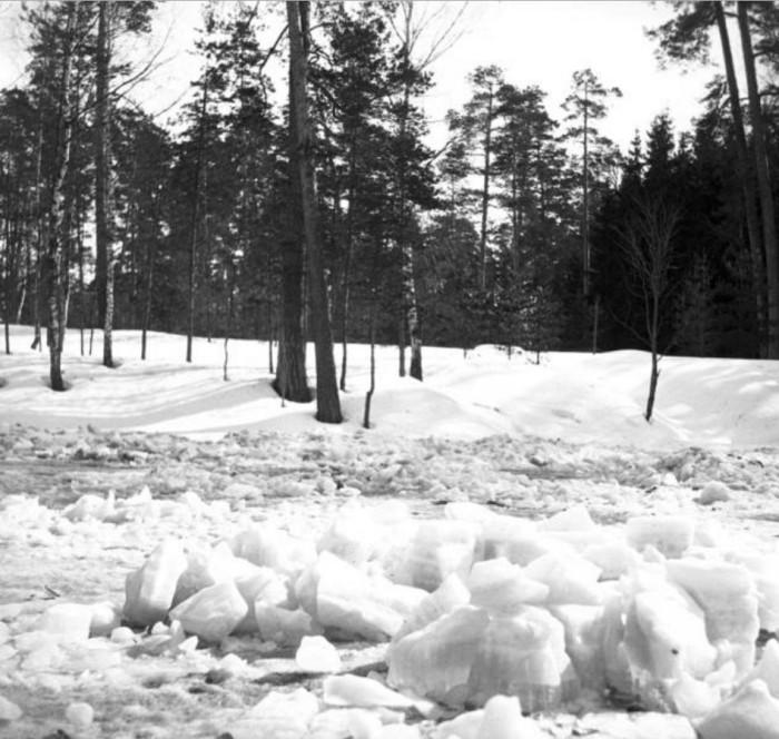 Прогулка по зимних Сокольниках.