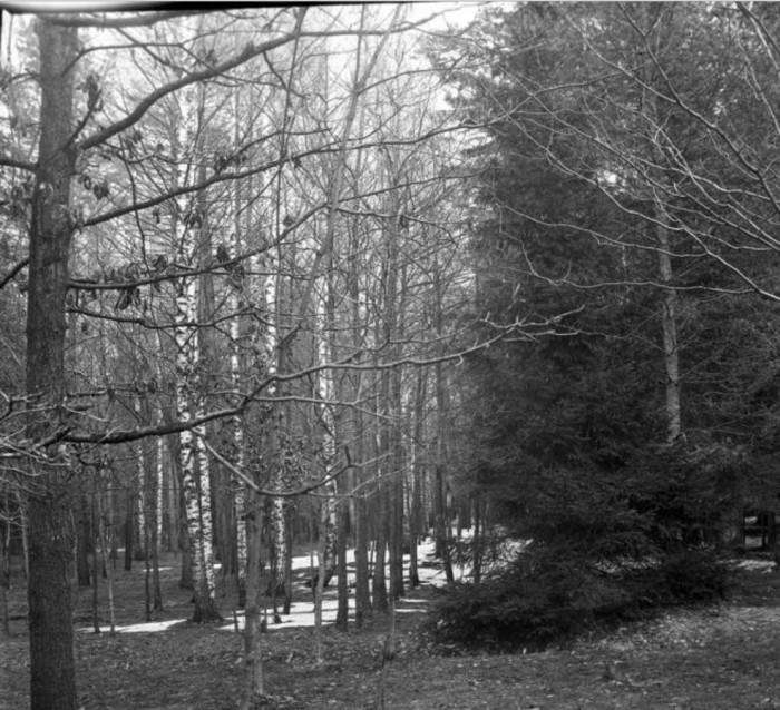 Весеннее настроение для прогулок в Сокольниках.