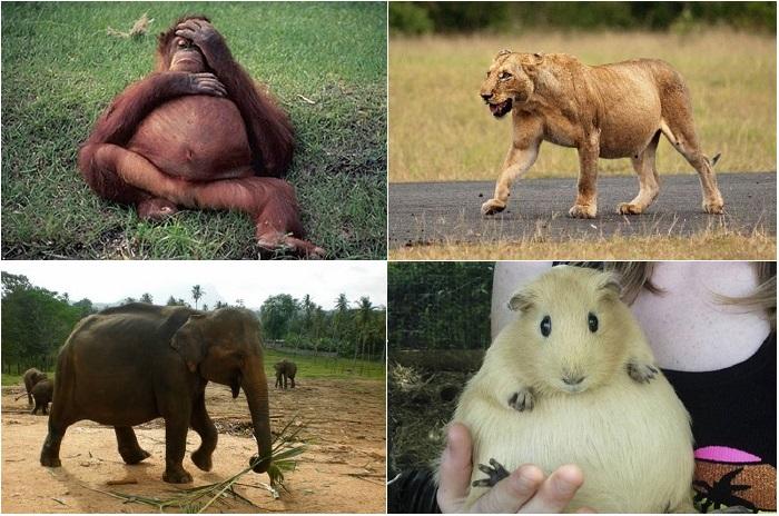 Удивительно красивые животные в «интересном положении».