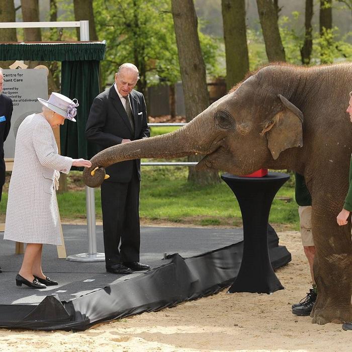 Королева в сопровождении герцога Эдинбургского посетила Уипснейдский зоопарк в Лондоне (Великобритания), где угостила слоненка Элизабет бананом.