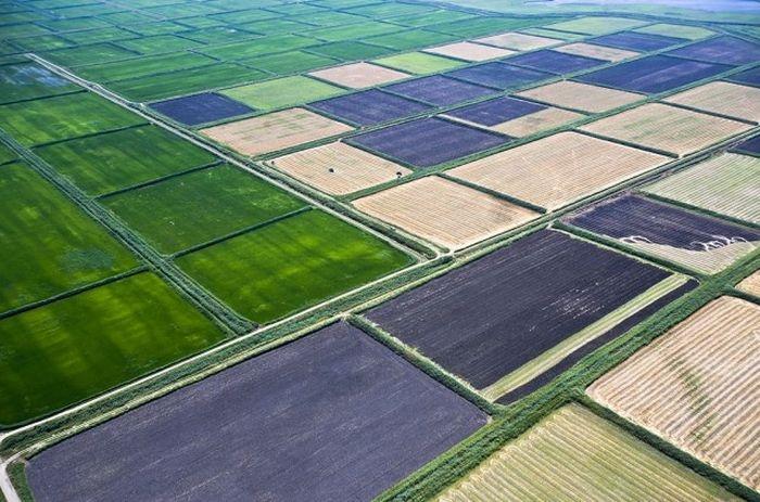 Рисовые поля занимают огромную территорию ежегодных посевов Краснодарского края.
