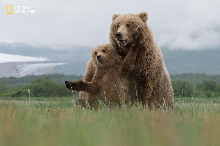 Претенденты на звание лучших фото дикой природы 2016 года.