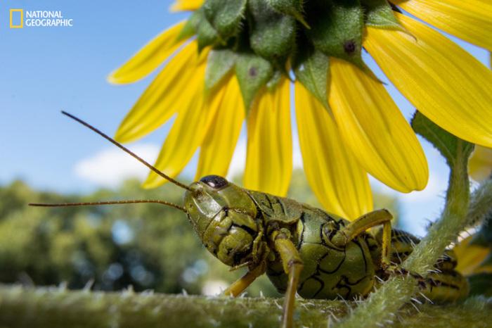 Насекомое очень внимательно рассматривает растение на котором сидит. Автор фотографии: Алекс Вайлей (Alex Wiles).
