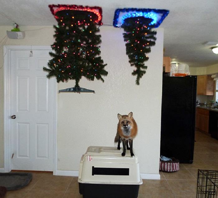 «Самый лучший способ установить рождественскую елку, если у вас дома живет лиса».