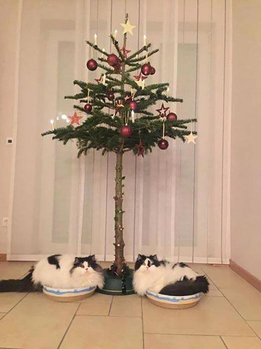 Судя по фотографии № 3 (смотрите выше), выбранная хозяином стратегия по защите рождественской елки не сработала.