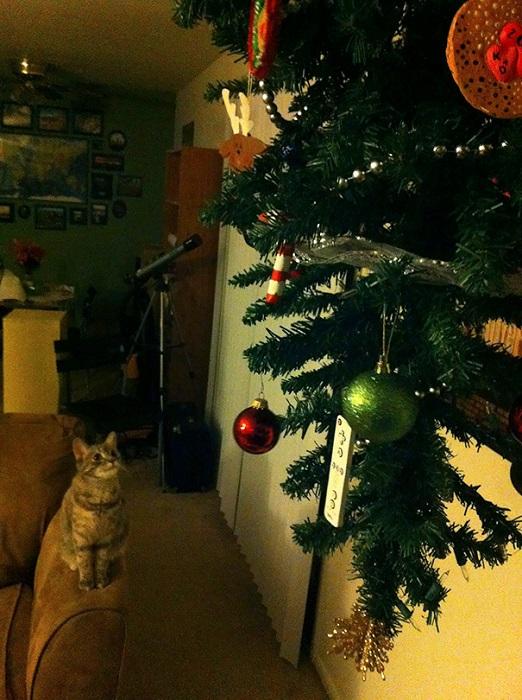 Кошке остается либо прыгать, либо просто «поедать» елочные шары глазами.