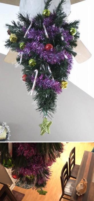 «Сегодня наконец-то установили рождественскую елочку… подальше от кота».