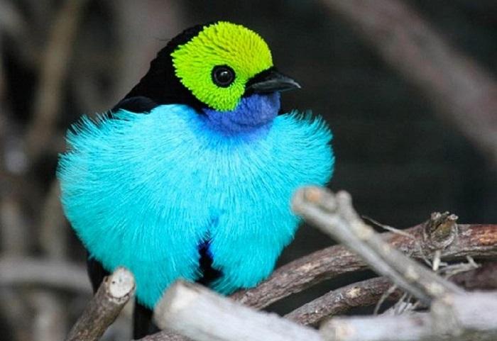 «Семицветная птичка».