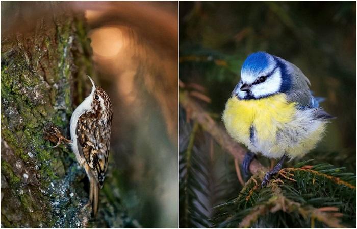 Фотографии птиц на снимках Осси Сааринена - анималиста из Финляндии.
