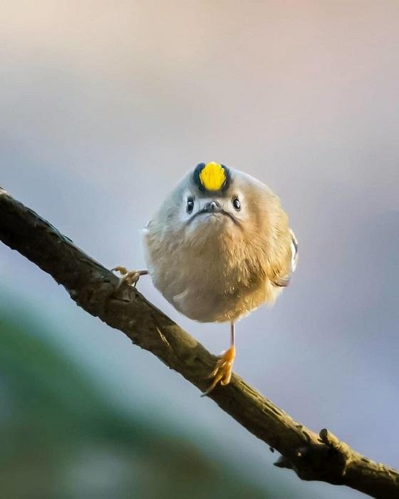На снимках птицы буквально позируют фотографу, получаясь одновременно сердитыми, симпатичными  и смешными.