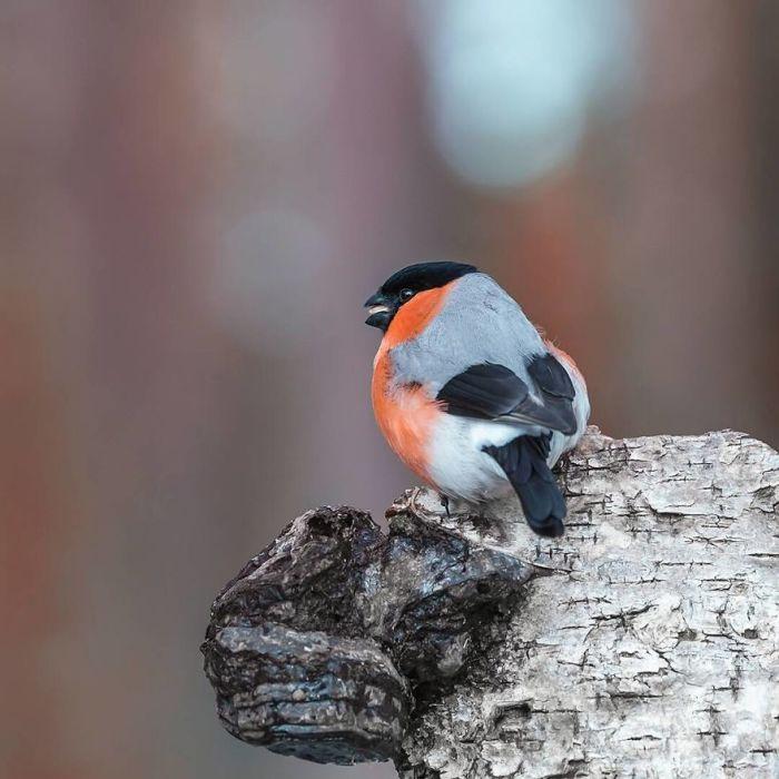Птицы на снимках Сааринена как будто специально красуются для его фотокамеры.
