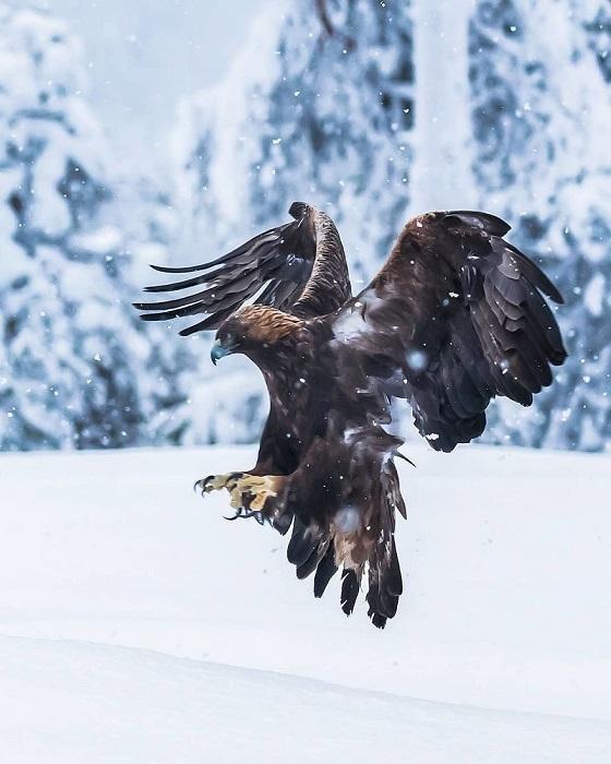 В своих работах фотохудожник  очень точно передает неповторимую красоту дикой природы.