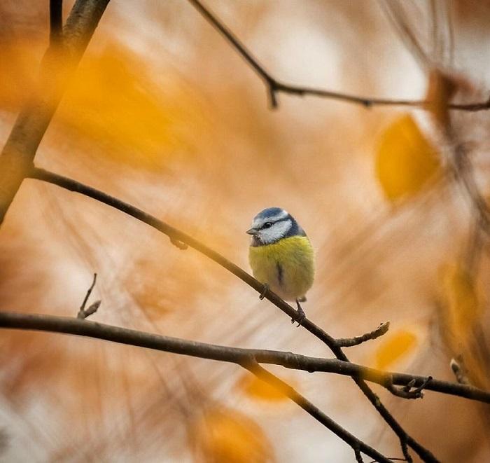 Своими снимками фотограф пытается вдохновить людей больше заботиться о природе.