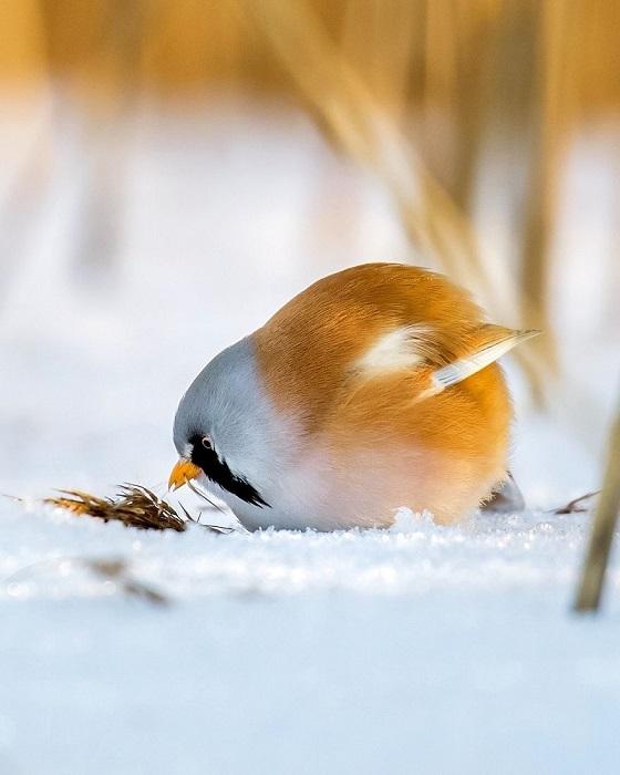 На фотографиях птицы буквально  являются реальным воплощением персонажей игры «Angry Birds».