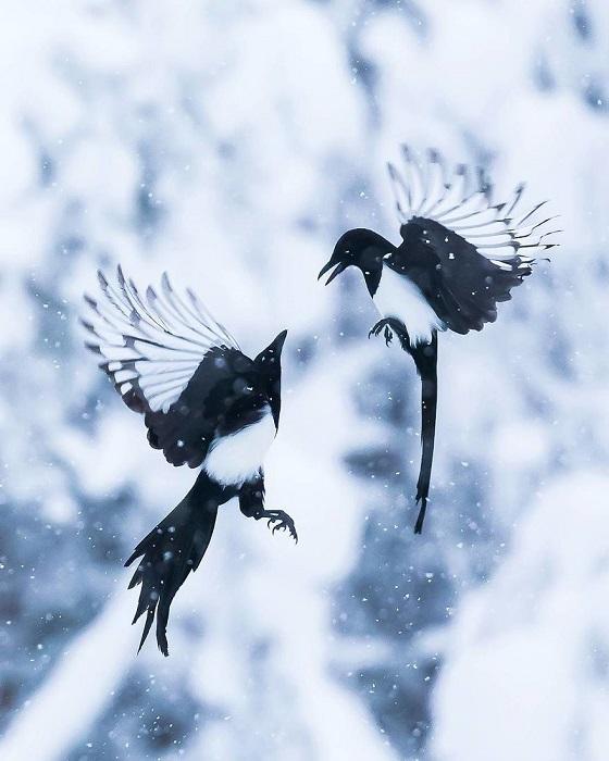 Снежный танец.