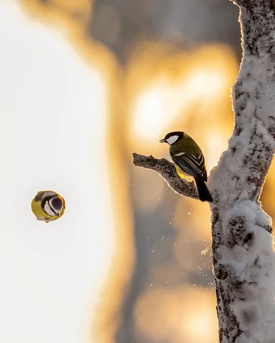 Финский фотограф, находясь в лесу по несколько часов, терпеливо выжидает своих «моделей».