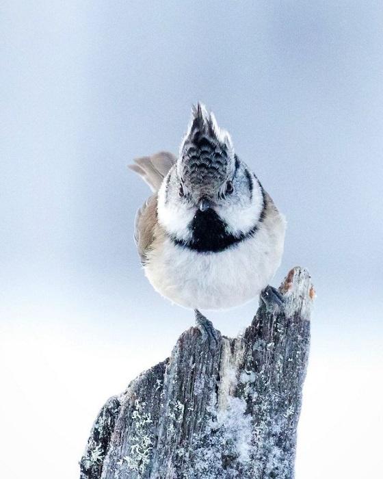 Ради красивых снимков, при температуре до -20 градусов, Осси терпеливо наблюдает за птицами.
