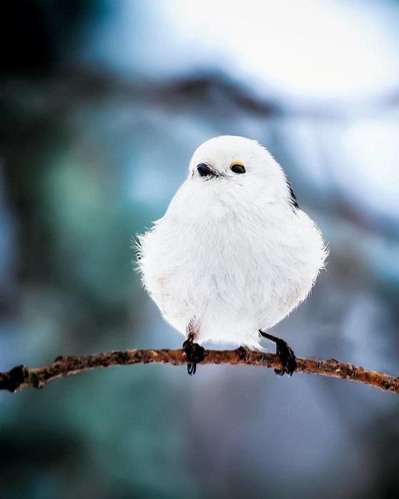 Любовь к природе, терпение и выдержка - незаменимые качества удачного фотохудожника.