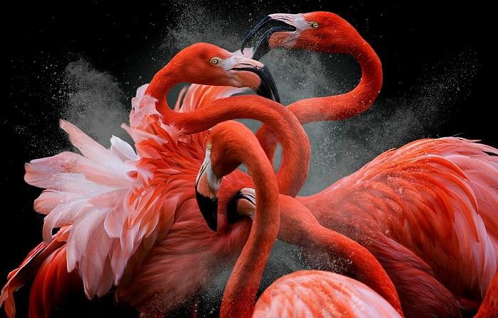Приз зрительских симпатий получил перуанский фотограф Педро Жарк Кребс (Pedro Jarque Krebs) за необычный снимок фламинго.