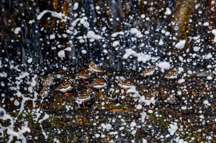 Серебро в категории «Птицы в окружающей среде».  Автор фотографии: Марио Суарез Поррас (Mario Suarez Porras), Испания.