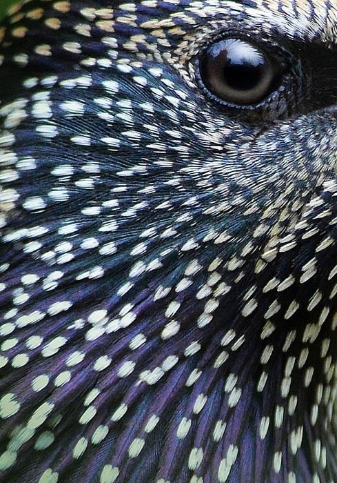 Серебро в категории «Внимание к деталям». Автор фотографии: Алан Прайс (Alan Price), Великобритания.