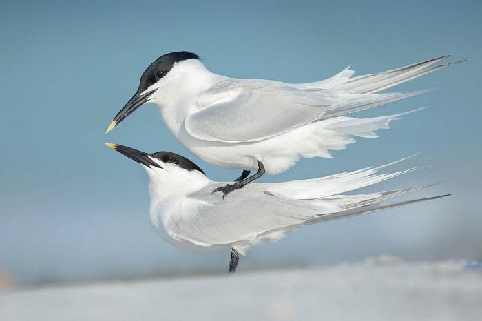 Серебро в категории «Поведение птиц». Автор фотографии: Петр Бамбусек (Petr Bambousek), Чехия.