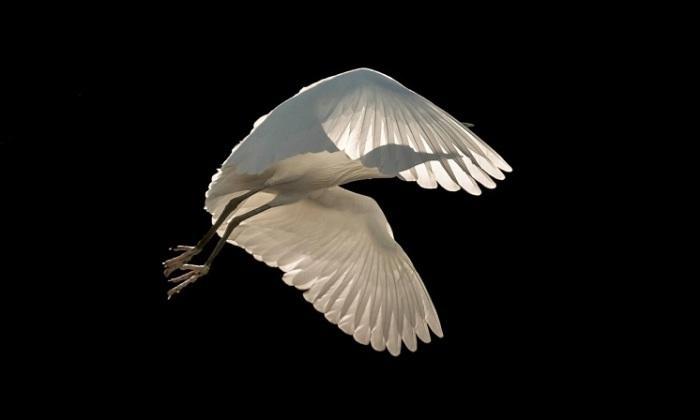 Победитель категории «Птицы в полете». Автор фотографии: Сиенна Андерсон (Sienna Anderson), Великобритания.
